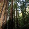 Nature et parcs américains