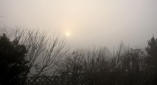 2020 temps de janvier brouillard et givre