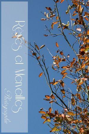 Feuille_d_automne_1