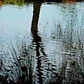 P1030149 Sur le canal
