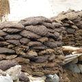 Ladakh 2 Aout 08 Olympus 159