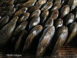 01_moules_eclade