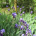 IMG_1857a