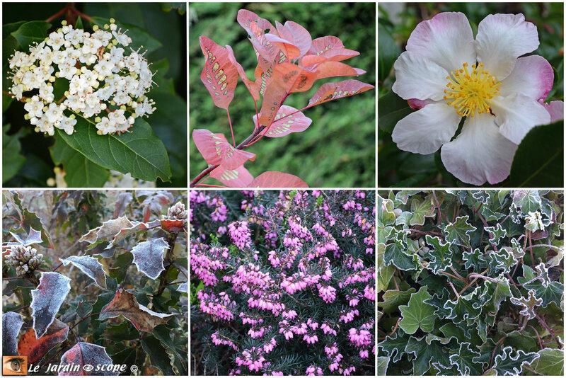 Couleurs du mois de décembre au jardin