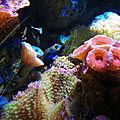 Biarritz, Musée de la Mer, Indo Pacifique, poisson mandarin (64)