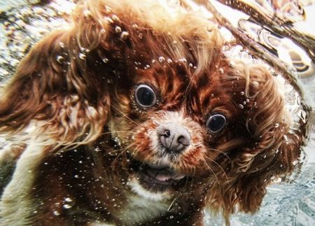 diving_dogs_photography2_550x395