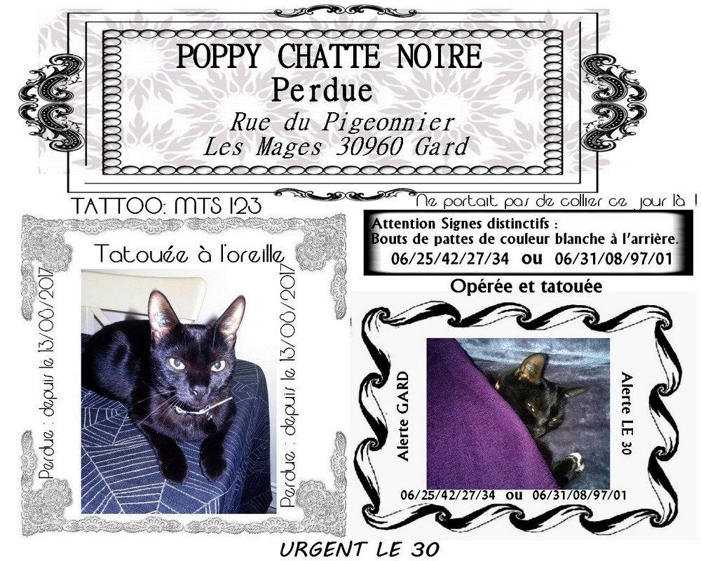 véritable chatte noire tube