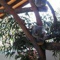 koala encore