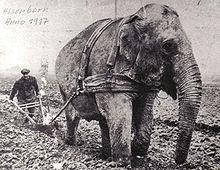 220px_1917_Elephant_vor_dem_Pflug
