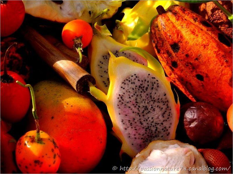 Fruits exotiques (9)