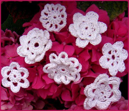 fleur_blanche