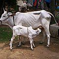 binjharpuri
