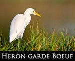 LIEN_heron_gb