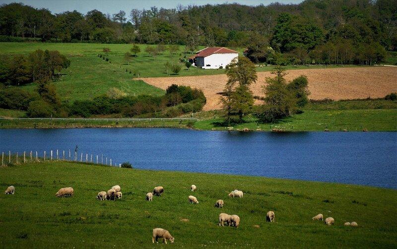 lac_haute_charente_moutons