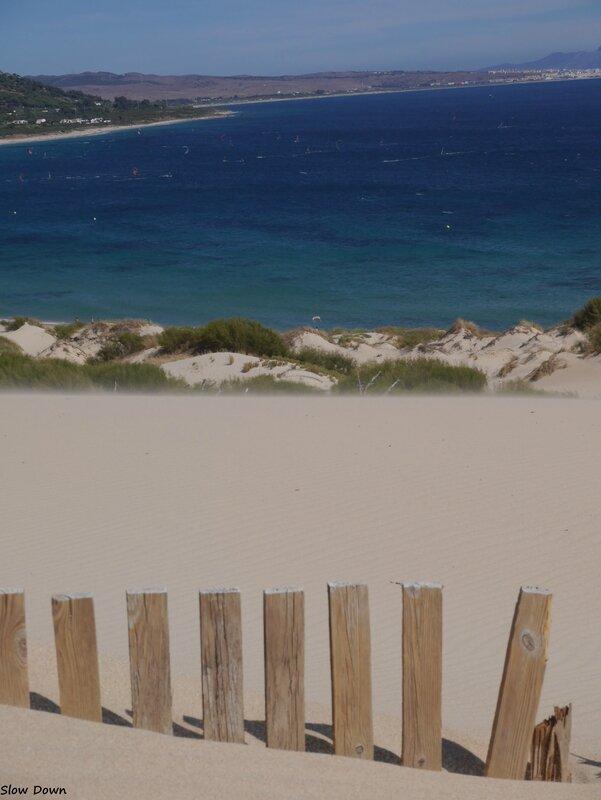 Piquets et dune