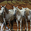 equestria9
