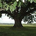 Chêne de Tombeboeuf 47800