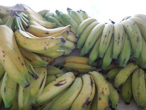 DSCN2609 Banana da agua