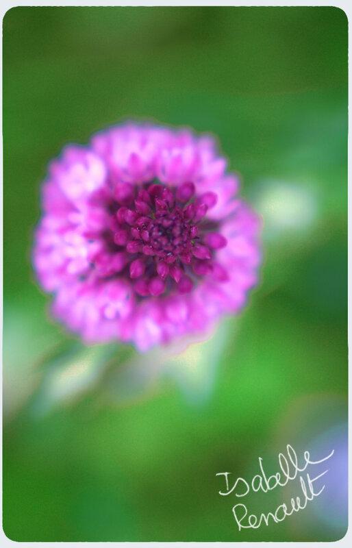 mon_jardin_37