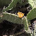 cactus dans la région de Debre Libanos