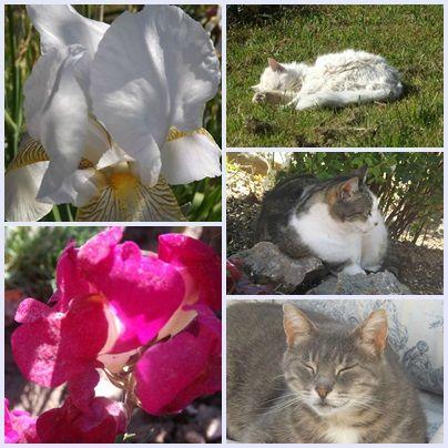 Cats & garden (2)