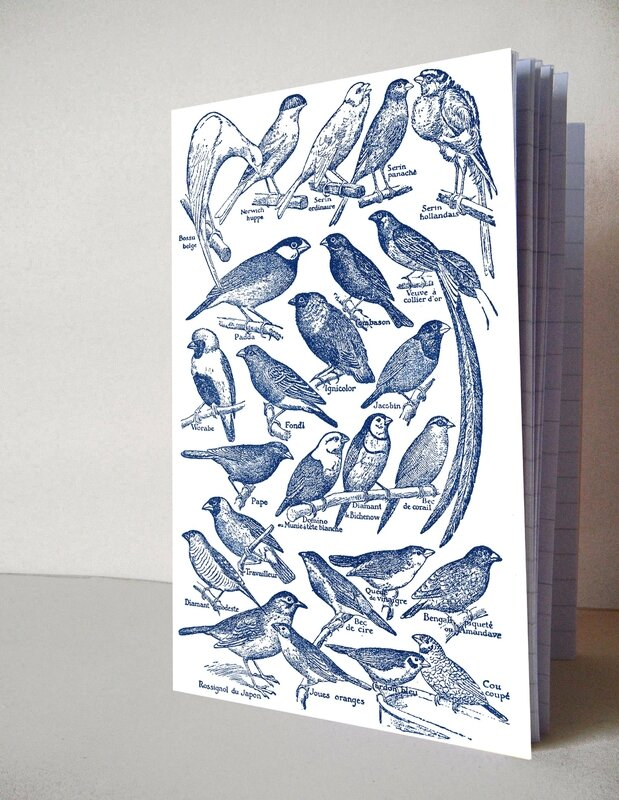 photo planche oiseaux