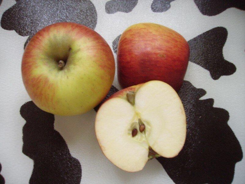 Pomme Rainette