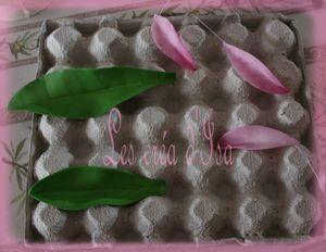 feuille et petales fleurs 2
