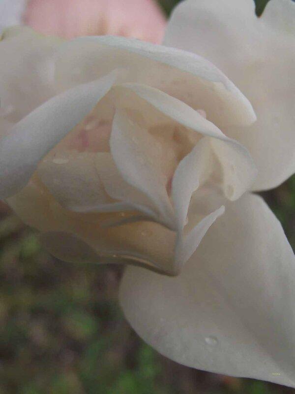 29022016-fleursetbanc07