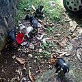 6 chiots jetés à la rue