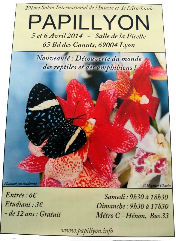Affiche Papillyon