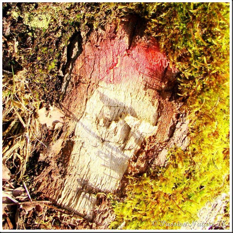 Le bois en forêt (16)