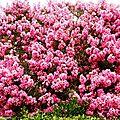 1-Fleurs et arbres fleuris de Léon 280717