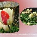 tulipes 2015_03_6