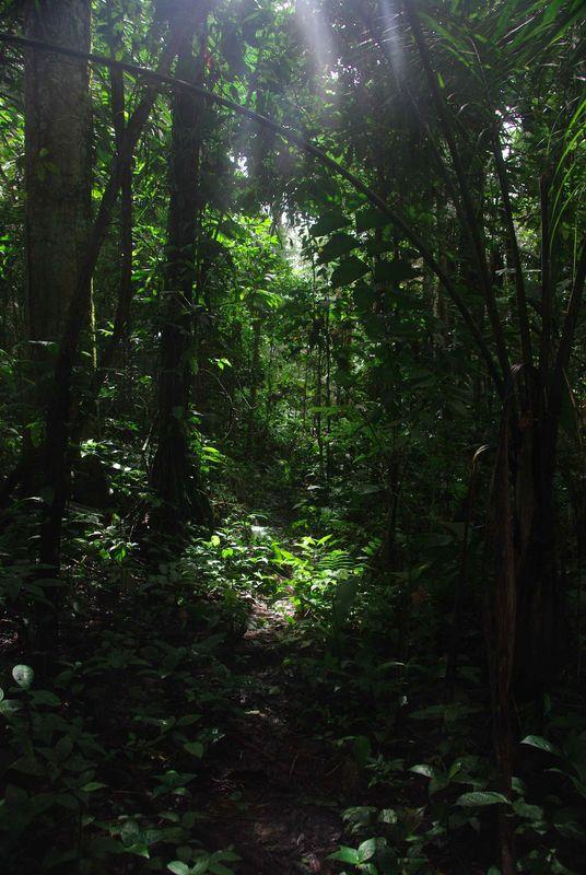 Ombre et lumière dans la forêt