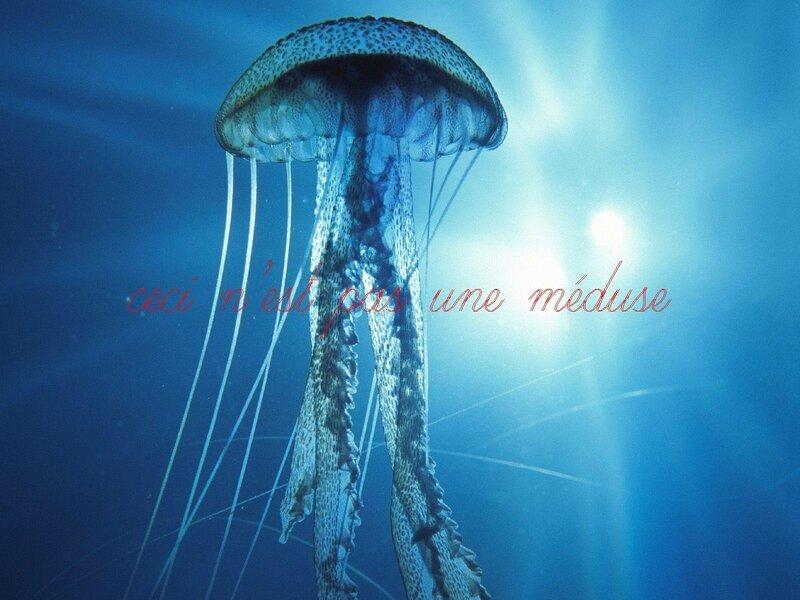 large_meduse2