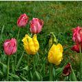 Quelques fleurs de saison.
