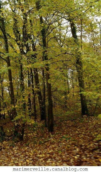 promenade en forêt - automne - Marimerveille
