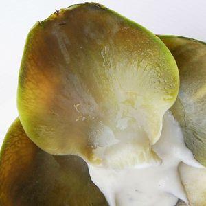 artichaut chèvre olive