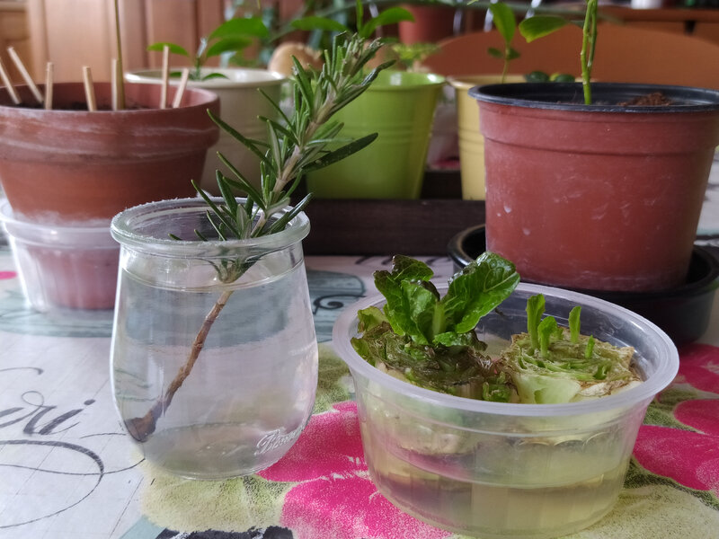regrowing permaculture