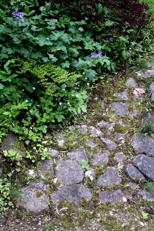 chemin champêtre
