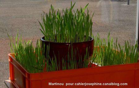 martinoupoulerousse06