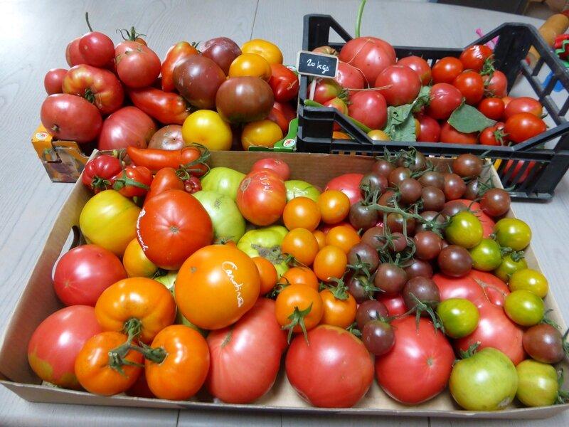 22-tomates du jour (3)