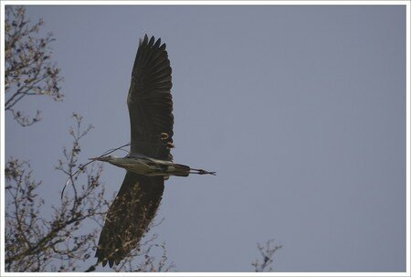 heron_plein_vol_transport_cardere