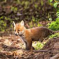 2014-05-30 LUX-1148