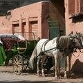 maroc 250