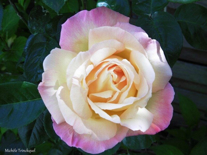 1-Lac de Christus et mes roses 040517