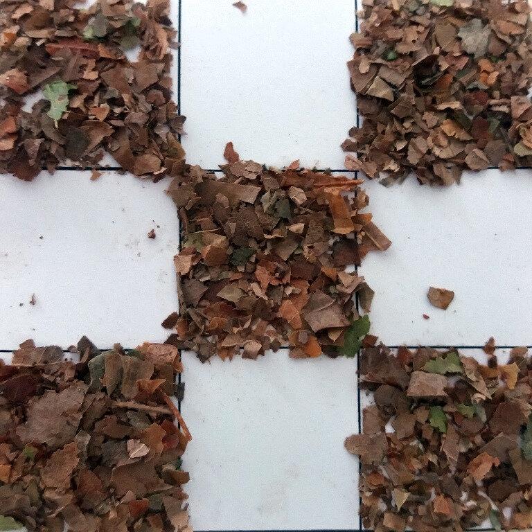 336-Automne-Miettes de feuilles (52)