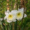 1ère fleur