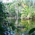 cahuita_parc national_04